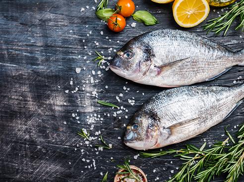 02 fishfood